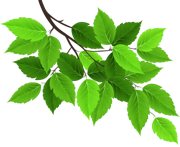 branch-with-leaves-png-2
